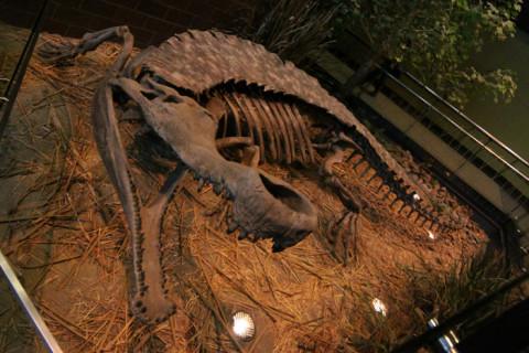 Um Super Crocodilo pré-histórico na entrada da Dinosphere