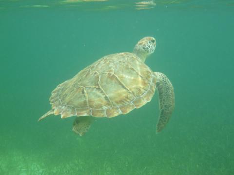 tartarugacastawaycay