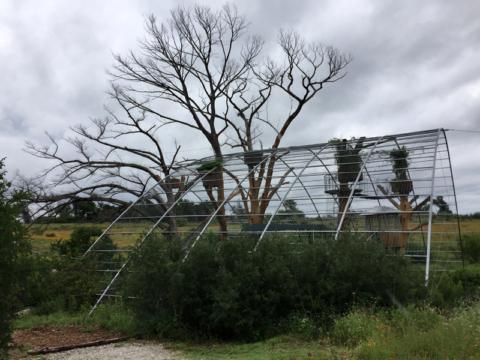 A estrutura metálica da The Nest que vai ser coberta por plantas