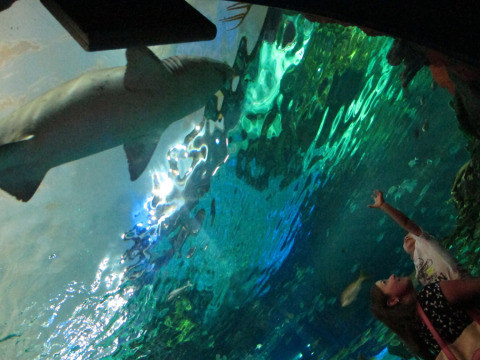 Eric deslumbrado com os tubarões (no colo da Livi)