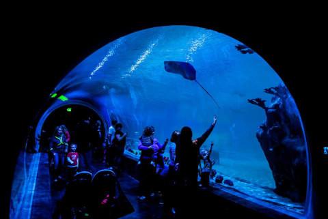O túnel do aquário é lindo