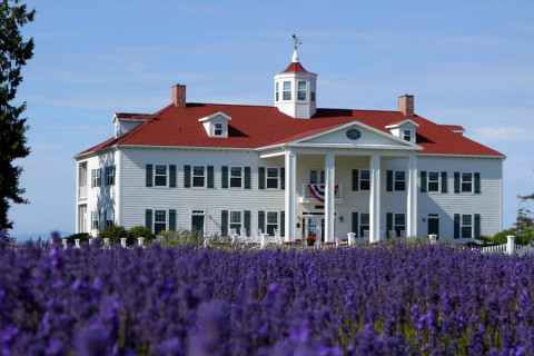 Washington Lavender Farm