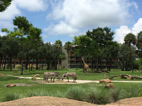 zebrasgirafasunsetsavannah