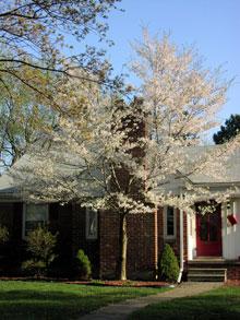 Flores em Michigan na Primavera