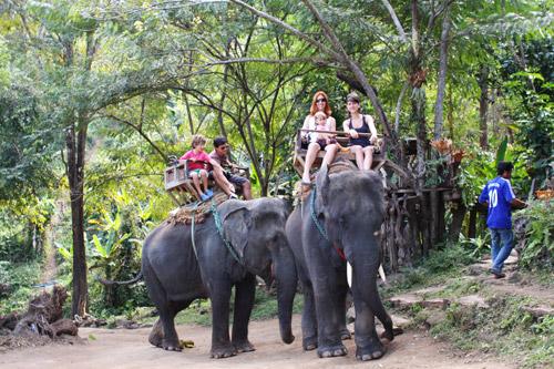 familia papp elefantes